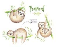Pittura isolata scuola materna di bradipo degli animali del bambino Disegno tropicale di boho dell'acquerello, illustrazione trop illustrazione vettoriale