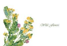 Pittura a olio dei fiori selvaggi Immagini Stock