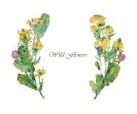 Pittura a olio dei fiori selvaggi Fotografia Stock
