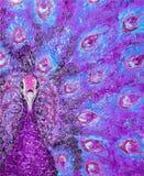 Pittura a olio su tela del ritratto di un pavone colorato