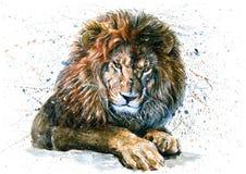 Pittura predatore della fauna selvatica degli animali dell'acquerello del leone Fotografia Stock
