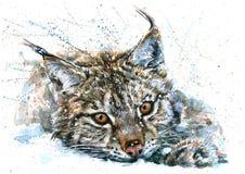 Pittura predatore della fauna selvatica degli animali dell'acquerello di Lynx Fotografia Stock