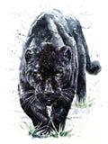 Pittura predatore della fauna selvatica degli animali dell'acquerello della pantera Fotografie Stock