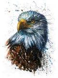 Pittura predatore della fauna selvatica dell'acquerello di Eagle dell'americano Immagini Stock