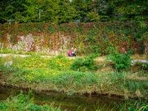 Pittura senza titolo della donna nella stagione di autunno a Seoul, Corea Fotografie Stock Libere da Diritti