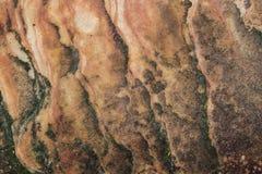 Pittura sui precedenti della parete Immagini Stock