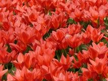 Pitture di aprile dell'Olanda 14 Fotografia Stock