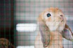 A pitty adorable baby rabbit in hutch. Very cute rabbit in a hutch Stock Photo
