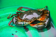 Pity crab Stock Photography