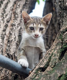 Pity cute kitten on tree Stock Photos