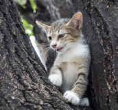 Pity cute kitten on tree Stock Photo