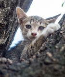 Pity cute kitten on tree Stock Photography