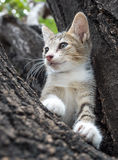 Pity cute kitten on tree Royalty Free Stock Photos