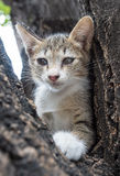 Pity cute kitten on tree Stock Images