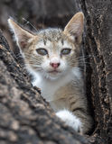 Pity cute kitten on tree Royalty Free Stock Images