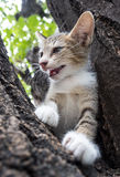 Pity cute kitten on tree Royalty Free Stock Photo