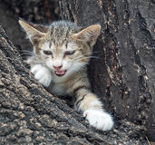Pity cute kitten on tree Stock Image