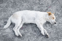 Pity dog Stock Images