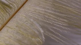 Piuma bianca stock footage