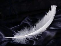 Piuma bianca come la neve Fotografia Stock