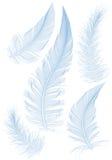 Piuma blu illustrazione vettoriale
