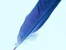 Piuma blu Immagine Stock Libera da Diritti