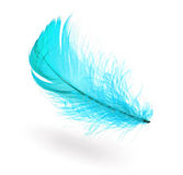 Piuma blu-chiaro Fotografia Stock