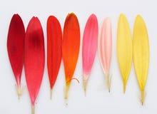 Piuma colourful del fiore fotografia stock libera da diritti