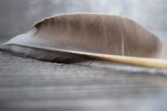 Piuma degli aironi neri sul cuscinetto di legno Immagine Stock Libera da Diritti