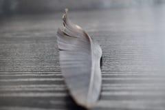 Piuma degli aironi neri sul cuscinetto di legno Fotografie Stock Libere da Diritti
