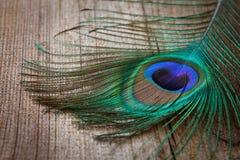 Piuma dei pavoni sulla scheda di legno Immagini Stock