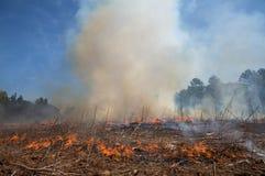 Piuma del fumo da un fuoco controllato Fotografia Stock Libera da Diritti