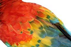 Piuma del Macaw fotografia stock libera da diritti