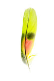 Piuma del pappagallo Fotografia Stock Libera da Diritti
