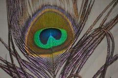 Piuma del pavone immagini stock libere da diritti