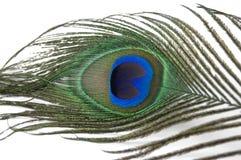Piuma del pavone Fotografie Stock Libere da Diritti