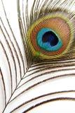 Piuma del pavone Fotografia Stock Libera da Diritti