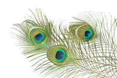 Piuma del pavone immagini stock