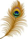 Piuma del pavone
