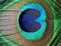 Piuma del pavone Fotografia Stock