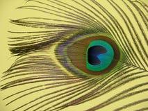 Piuma del pavone fotografie stock