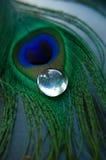 Piuma del pavone con la pietra di vetro Fotografie Stock Libere da Diritti