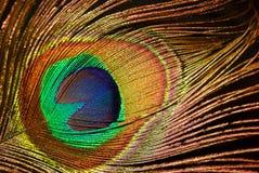 Piuma del pavone del particolare Fotografia Stock Libera da Diritti