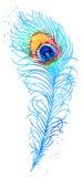 Piuma del pavone dell'acquerello di vettore Immagine Stock
