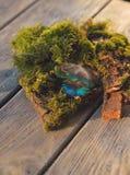 Piuma del pavone e del muschio Fotografia Stock
