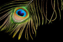 Piuma del pavone sul nero fotografia stock libera da diritti