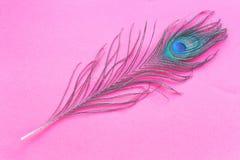 Piuma del pavone isolata su fondo rosso Fotografie Stock Libere da Diritti