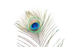 Piuma del pavone su bianco Fotografia Stock