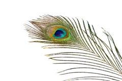 Piuma del pavone su priorità bassa bianca Immagini Stock Libere da Diritti