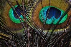 Piuma del pavone un giorno luminoso fotografie stock libere da diritti